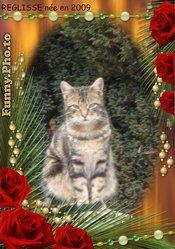 Reglisse, chat Gouttière