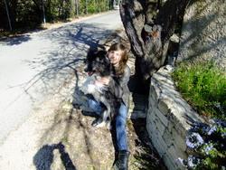 Réglisse, chien Border Collie