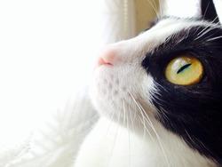 Réglisse, chat Gouttière