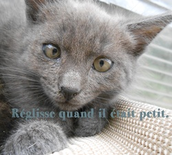 Réglisse, chat