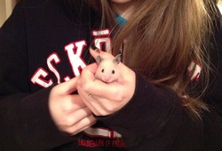 Remie, rongeur Hamster