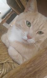 Rémy, chat Gouttière