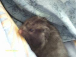Repose En Paix Mini, rongeur Hamster
