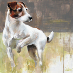 Reproduction Jack Russel, chien Jack Russell Terrier