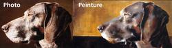 Reproduction Braque Allemand, chien Braque allemand à poil court