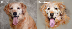 Reproduction Golden Retriever, chien Golden Retriever