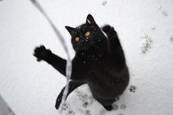 Rescue, chat Gouttière