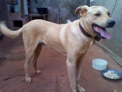 Rex, chien
