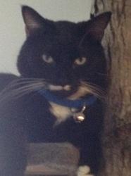 Rex, chat Gouttière