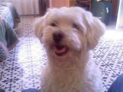 Ricky, chien