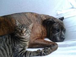 Rico, chat Gouttière