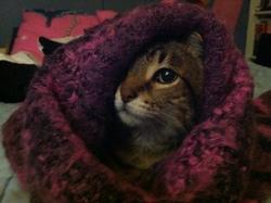 Rififi, chat Gouttière