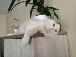 Riki, chat Gouttière