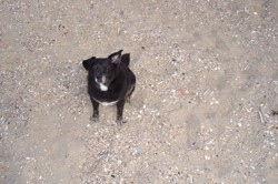 Rimel, chien