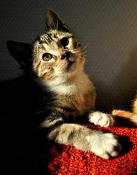 Rinko, chat Gouttière