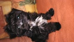 Rio, chien