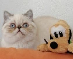 Ripley, chaton