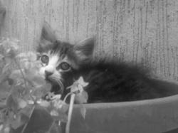Rissy, chat Gouttière