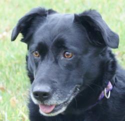 Rita, chien