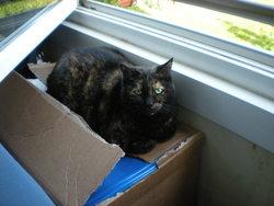 Roberta, chat Gouttière