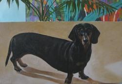 Roberta, chien Teckel