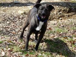 Rocco, chien