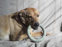 Rocky, chien
