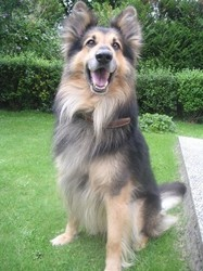Rocky Perdu, chien