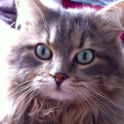 Rocky, chat Gouttière