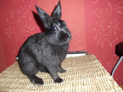 Rocky, rongeur Lapin
