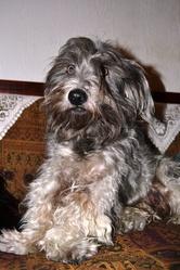 Roddy, chien