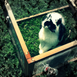 Roger, rongeur Lapin