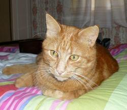 Romeo, chat Gouttière