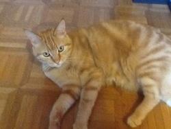 Roméo , chat