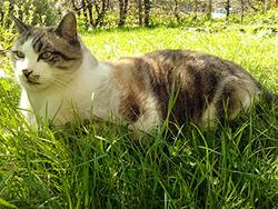 Roméo, chat Gouttière