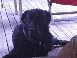 Romeo, chien