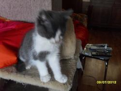 Roméo, chat