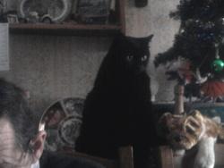 Roméo Rip, chat