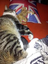 Rominet, chat Gouttière