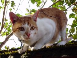 Romrok, chat Gouttière