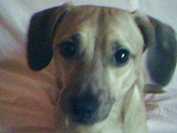 Ronflo , chien