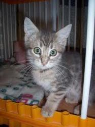 Ronron, chat Gouttière