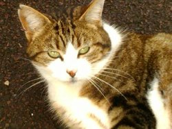 Rorotte, chat Gouttière