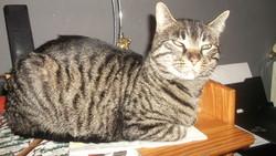 Rosa, chat Gouttière