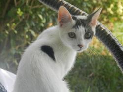 Rosa Chat Rencontré En Vacances, chat Gouttière