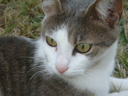Rosalie, chat