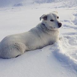 Rosalie, chien