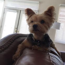 Rosie, chien