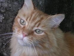 Roucky, chat Gouttière