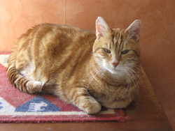 Rouki, chat Gouttière
